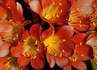 Close up of orange and yellow flowers