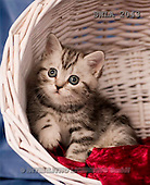 Carl, ANIMALS, photos, grey kitten, basket(SWLA2043,#A#) Katzen, gatos