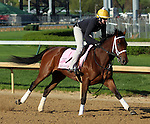 April 23, 2014  Aurelia's Belle and rider Calamity Compton gallop at Churchill Downs.  She recently won the Bourbonette Oaks for trainer Wayne Catalano and owner James F. Miller.