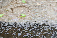 Schaum, Schaumbildung in einem Bach, Wasseroberfläche, scum, foam, spume, foam formation, frothing formation