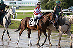 NEW ORLEANS, LA - JANUARY 21:<br />  Raagheb #2 ridden by Mitchell Murrell in the post parade before the Louisiana Stakes at the Fairgrounds Race Course on January 21,2017  in New Orleans, Louisiana. (Photo by Steve Dalmado/Eclipse Sportswire/Getty Images)