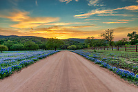 Road Less Traveled - We love this county dirt road in the Texas Hill country in spring with the bluebonnets lining the road and the hills behind as the sunsets in the west. You can get a feel for the rural hill country here with the texas bluebonnets and hills with this wonderful texas sunset. The back road in Texas hill country are always less traveled but can be beautiful places where you can see for a great distance in some places with some very nice traditional texas scenery. Add a few bluebonnets wildflowers and you have a nice texas hill country landscape with texas bluebonnets what more can yo ask for. This is a place where we come every year first to check for bluebonnets as it is a great place to see bluebonnets if we are having a good year.