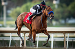 February 13, 2021: Merneith with Edwin Maldonado aboard wins the Santa Monica Stakess at Santa Anita Park in Arcadia, California on February 13, 2021. Evers/Eclipse Sportswire/CSM