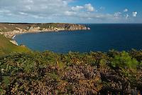 France, Côtes-d'Armor (22), Côte d'Emeraude, Plévenon,  Cap Frehel,     Paysage de lande de bruyères et d' ajoncs depuis le Cap Fréhel vers  Fort-la-Latte , sur le GR 34 / / France, Brittany, Cotes-D'Armor,  Emeraude coast , Cap Frehel, Landscape of moorland and gorse from Cape Freels to Fort la Latte, on the GR 34