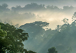 There are 324 tree species in the Bwindi Impenetrable National Park, Uganda.