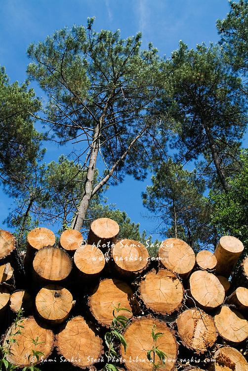 Stack of logs piled together in Landes Forest, Mano, Aquitane, France.