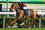 SHA TIN,HONG KONG-DECEMBER 10: Time Warp,ridden by Zac Parton,wins the Hong Kong Cup at Sha Tin Racecourse on December 10,2017 in Sha Tin,New Territories,Hong Kong (Photo by Kaz Ishida/Eclipse Sportswire/Getty Images)