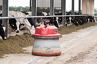 5-8-2021 Lely robot pushing maize silage in a feed passage   on a dairy farm <br /> ©Tim Scrivener Photographer 07850 303986<br />      ....Covering Agriculture In The UK....