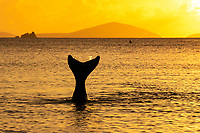 Mermaid diving into the sea at sunset<br />