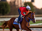 November 4, 2020: King Fury, trained by trainer Kenneth G. McPeek, exercises in preparation for the Breeders' Cup Juvenile at Keeneland Racetrack in Lexington, Kentucky on November 4, 2020. Alex Evers/Eclipse Sportswire/Breeders Cup