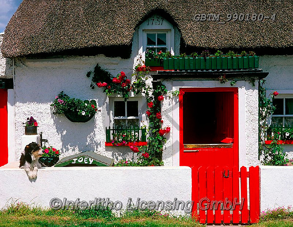 Tom Mackie, LANDSCAPES, LANDSCHAFTEN, PAISAJES, FOTO, photos,+6x7, building, buildings, chocolate box, color, colorful, colour, colourful, cottage, cottages, dog, dogs, dwelling, Eire, EU+, Europa, Europe, European, home, horizontal, horizontally, horizontals, house, houses, Ireland, Irish, medium format, reside+nce, rose, roses, thatch, thatched roof, traditional, white washed,6x7, building, buildings, chocolate box, color, colorful,+colour, colourful, cottage, cottages, dog, dogs, dwelling, Eire, EU, Europa, Europe, European, home, horizontal, horizontally+,GBTM990180-4,#L#, EVERYDAY ,Ireland
