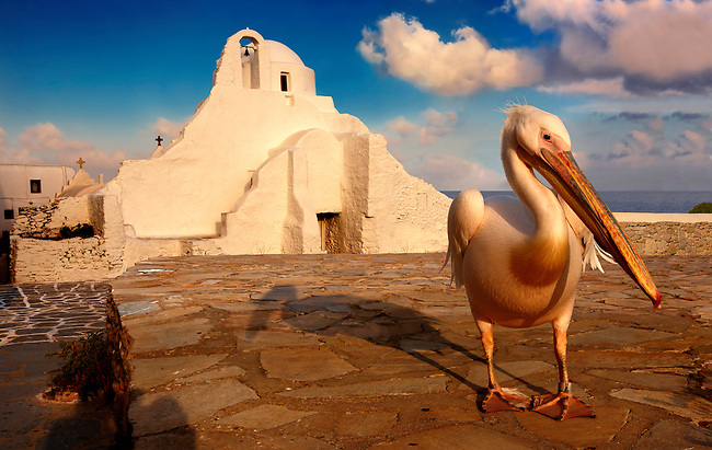 Paraportiani Greek Orthodox churches of Mykanos Chora with Petros, the Pelican town mascot , Cyclades Islands, Greece