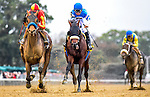 ELMONT, NY - OCTOBER 08: Hoppertunity #3 (red cap), ridden by John Velazquez, wins thw Jockey Club Gold Cup on Jockey Club Gold Cup Day at Belmont Park on October 8, 2016 in Elmont, New York. (Photo by Scott Serio/Eclipse Sportswire/Getty Images)
