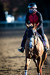 Whitmore, trained by Ron Moquett, exercises in preparation for the Breeders' Cup Sprint at Keeneland 11.03.20.