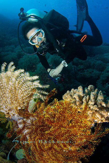 Diver on the Reef, Cogon