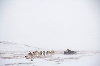 2006 Yukon Quest musher Kelley Griffin in near whiteout conditions on Eagle Summit.