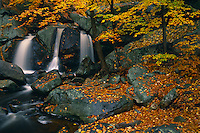 Trap Falls<br />   and American beech trees<br /> Willard Brook State Forest<br /> Massachusetts