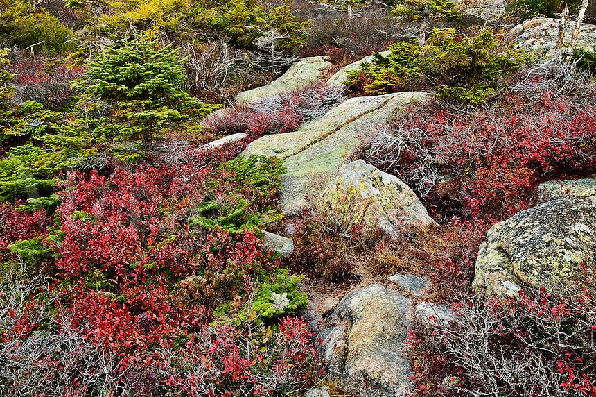 Granite and groundcover foliage, Cadillac Mountain, Acadia National Park, Maine, USA