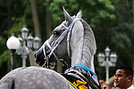 July 21, 2012  Awesome Maria walks in the paddock before competing in the Delaware Handicap at Delaware Park, Stanton, DE. The Todd Pletcher-trained mare finished third in the race, which was won by Royal Delta. ©Joan Fairman Kanes/Eclipse Sportswire