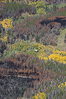 Cabin surrounded by forest fire burn survives. Northern Colorado. Sept 2012