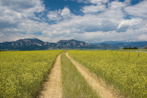 Dirt road and flowers overlooking Boulder, Colorado, John offers private photo tours of Boulder, Denver and Rocky Mountain National Park.