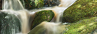Forest stream in Oparara Valley near Karamea, Kahurangi National Park, Buller Region, West Coast, New Zealand