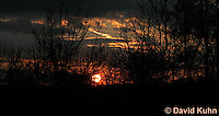 1223-0901  Sunset in Forest  © David Kuhn/Dwight Kuhn Photography