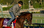 October 28, 2019 : Breeders' Cup Juvenile Fillies entrant Two Sixty, trained by Mark E. Casse, exercises in preparation for the Breeders' Cup World Championships at Santa Anita Park in Arcadia, California on October 28, 2019. John Voorhees/Eclipse Sportswire/Breeders' Cup/CSM