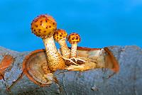 Mushrooms growing out of Fallen Tree Trunk
