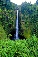 Akaka falls, Islands longest falls,Big Island