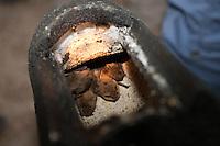 Fledermaus-Nistkasten mit Fledermaus, Nistkasten für Fledermaus, Fledermauskasten, Fledermaus-Kasten, Spezialkasten für Fledermäuse wird von Naturschützer kontrolliert und gereinigt, Fledermausschutz, Fledermaus-Schutz