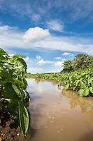 Flooded potates ridges following heavy irrigation