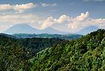 Bwindi Impenetrable Forest, Volcanoes in distance, Uganda