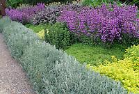 Herb border  with Santolina, Sage and Oregano in British Columbia