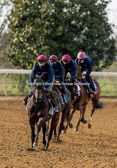 November 5, 2020: Lipizzaner, Battleground, Mother Earth, Snow Fall train for the Breeders Cup at Keeneland Racetrack in Lexington, Kentucky on November 5, 2020. Alex Evers/Eclipse Sportswire/Breeders Cup