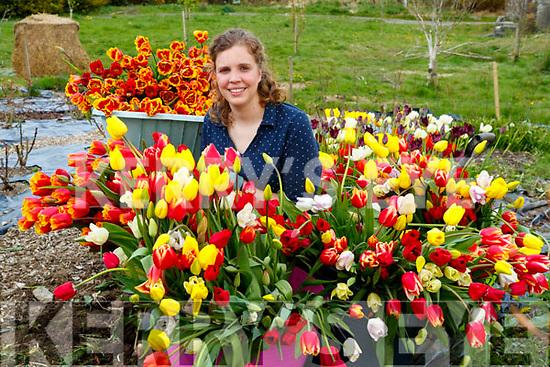 Lyrecrompane flower grower Jiska Healy who is donating her crop of Tulips to Kerry nursing homes.
