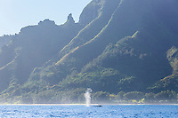 A humpback whale blows out air off of the Na Pali Coast of Kaua'i.