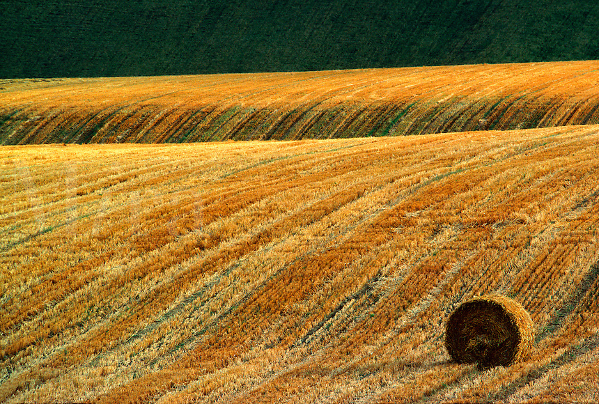 Straw-bale in corner of stubble-field after barley harvest, Shropshire, England