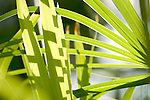 Europa, DEU, Deutschland, Nordrhein Westfalen, NRW, Ruhrgebiet, Bochum, Ruhr-Uni, Botanischer Garten, Pflanzen, Nahaufnahme, Kategorien und Themen, Natur, Umwelt, Pflanzen, Pflanzenkunde, Botanik, Biologie, ....[Fuer die Nutzung gelten die jeweils gueltigen Allgemeinen Liefer-und Geschaeftsbedingungen. Nutzung nur gegen Verwendungsmeldung und Nachweis. Download der AGB unter http://www.image-box.com oder werden auf Anfrage zugesendet. Freigabe ist vorher erforderlich. Jede Nutzung des Fotos ist honorarpflichtig gemaess derzeit gueltiger MFM Liste - Kontakt, Uwe Schmid-Fotografie, Duisburg, Tel. (+49).2065.677997, ..archiv@image-box.com, www.image-box.com]