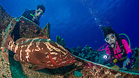 20 June 2016: SCUBA Divers Sally Herschorn and Josh Wolfstein encounter a Nassau Grouper (Epinephelus striatus) at the Wreck of the Oro Verde off the shores of 7-Mile Beach on the West side of Grand Cayman Island. Located in the British West Indies in the Caribbean, the Cayman Islands are renowned for excellent scuba diving, snorkeling, beaches and banking.  Mandatory Credit: Ed Wolfstein Photo *** RAW (NEF) Image File Available ***