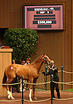 12 September 2010.  Hip #9 Giant's Causeway - Alidiva (IRE) filly sold for $350,000 at the Keeneland September Yearling Sale.   Consigned by Taylor Made Sales.