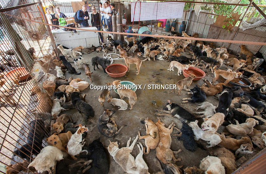 Dogs ready to be saved by the Animal Hope and Wellness Foundation are seen at a dog slaughterhouse in Yulin during the Yulin Dog Meat Festival, Yulin, Guangxi Province, China, 21 June 2016.<br /> <br /> Photo by STR / Sinopix