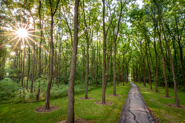 August 9, 2020; Path through grove of walnut trees on the northwest edge of campus (Photo by Matt Cashore/University of Notre Dame)