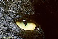 CT02-002z  Cat - eye close-up