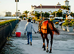 January 20, 2021: A pony and rider wait during the break as horses prepare for the 2021 Pegasus World Cup Invitational at Gulfstream Park in Hallandale Beach, Florida. Scott Serio/Eclipse Sportswire/CSM