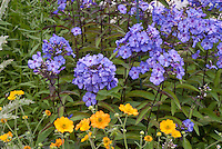 Phlox paniculata 'Blue Paradise', Geum 'Totally Tangerine', blue and orange color combination