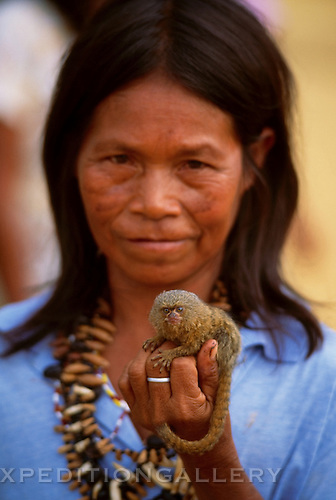 A pygmy marmoset being held as a pet by a native Ticuna Indian woman in the Brazilian Amazon. The pygmy marmoset (Cebuella pygmaea) is the smallest of the New World primates, and is found in Amazon rainforest habitats in Brazil, Colombia, Ecuador, Peru and Bolivia. The species is a gum feeding specialist, gnawing holes in the bark of trees and vines to feed on gum-like sap. [NO MODEL RELEASE]