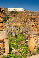 A gate in a stone wall and a sign saying 'M Chapoutier' Terraced vineyards in the Cote Rotie district around Ampuis in northern Rhone planted with the Syrah grape. Ampuis, Cote Rotie, Rhone, France, Europe