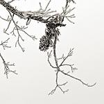 #blackandwhite #monochrome #winter #wisconsin @midwestmemoir #snow