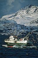 Europe/Norvège/Iles Lofoten: Pèche au Skrei - Cabillaud